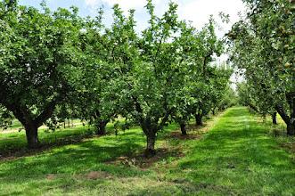 Photo: Boomgaard - Orchard RHS gardens Wisley