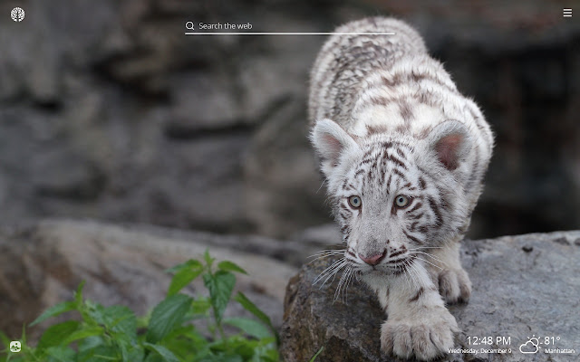 White Tiger HD Wallpapers New Tab Theme