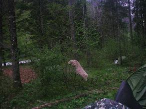 Photo: ein Eisbär ist auch da