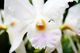 Photo: ...bright white...  Happy Monday! New day, new week, new work... The Beauty of Nature in white...Macro of a white orchid!  Contribution to #macromonday  +Macro Monday by +Kerry Murphy, +Jennifer Eden and +Kelli Seeger Kim; #breakfastclub  +Breakfast Club by +Gemma Costa; #hqspflowers  +HQSP Flowers +Werner Polwein, +Larry Henley and +Nicole Best; #canonusers   #canon #canonphotographers   #canonphotography , +Canon Users  #photography #PlusPhotoExtract  #flowers     #floral  #promotephotography +Promote Photography;   View larger image and more works from White Floral Gallery: http://smu.gs/17lUEnX