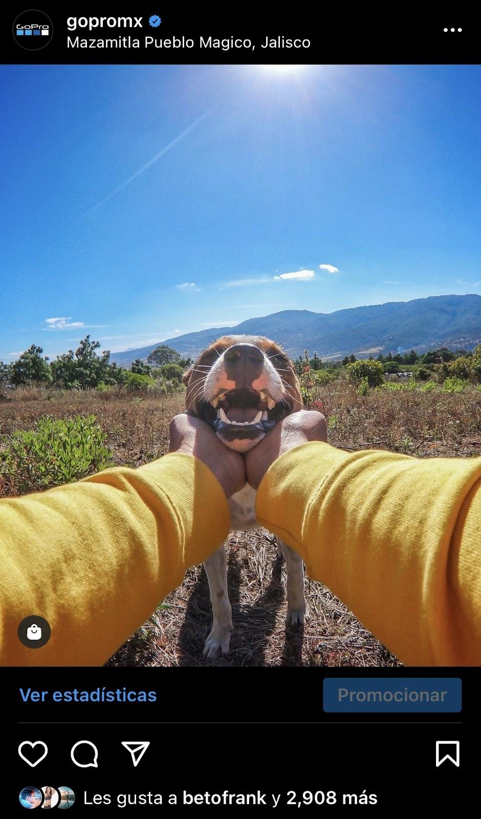 gopromx foto de un perro