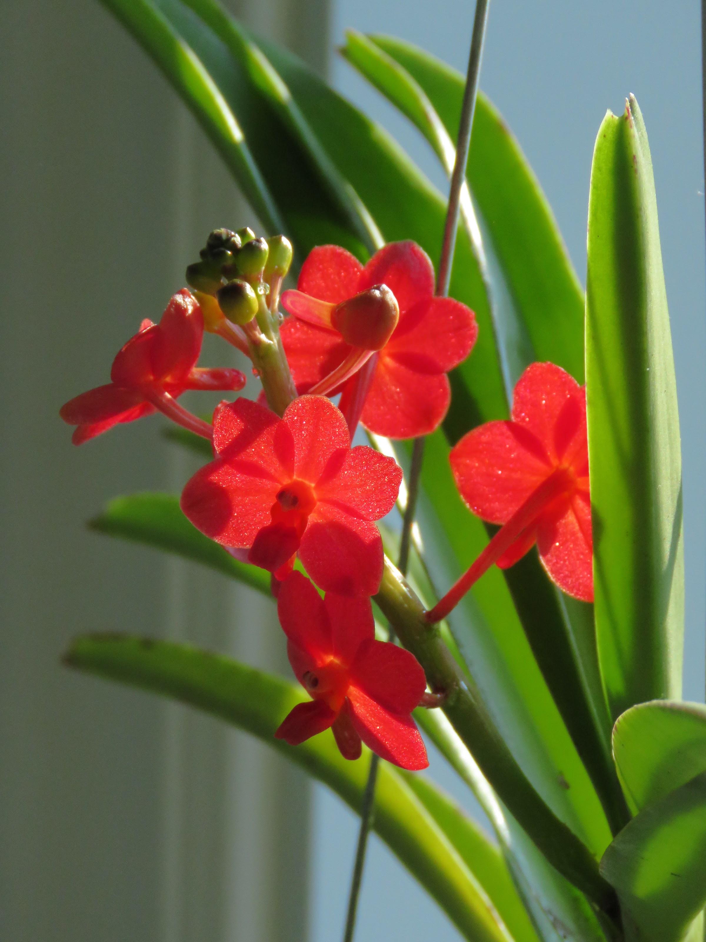 Les orchidées de Grigri - Page 11 X9bFQ9g0QiG_5GkTA28hbofqAg2-wF9GUFpy5_CH4P9j5GpTLML8LpYm8NJR-jkiwtXydXOZXmrtknLxzXALhI_EI05zIQnU1pAzNXRvcepTwn2k87rt8DUzxkKI45LeNW9GVDBjm8Q=w2400