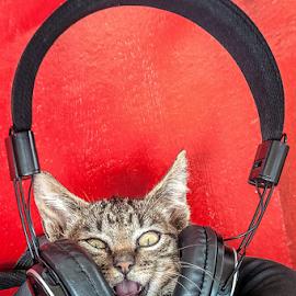 Music power! by Jesus Giraldo - Animals - Cats Playing ( contrast, music, cat, red, funny, kitty, headphone )