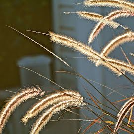 by Victoria Eversole - Nature Up Close Other plants ( pussywillows, street scene, early morning )