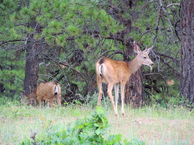 Deer near Chicken Creek