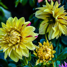 by Mohsin Raza - Flowers Flowers in the Wild