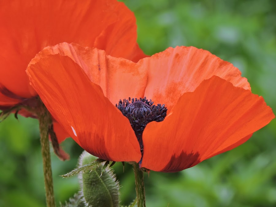by Helen Beatrice - Flowers Flower Gardens
