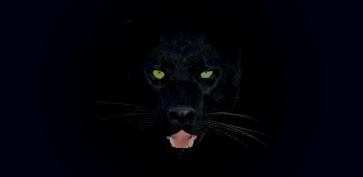 Descargar Black Panther Hd Wallpapers Para Pc Gratis