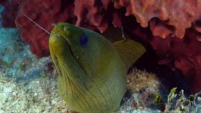 Belize thumbnail