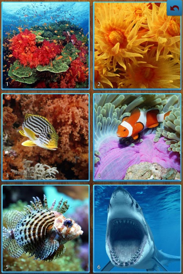 Sea Life Jigsaw Puzzles- screenshot