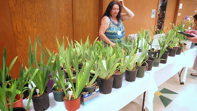 Photo: Potted irises for sale
