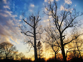 Photo: Barren trees against a beautiful sunset at Eastwood Park in Dayton, Ohio.