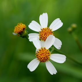 by Alnia Furwani Maulina - Flowers Flowers in the Wild (  )
