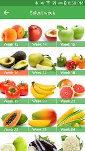 Pregnancy Week By Week- screenshot thumbnail