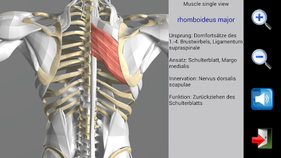 Visual Muscles 3D – Apps bei Google Play