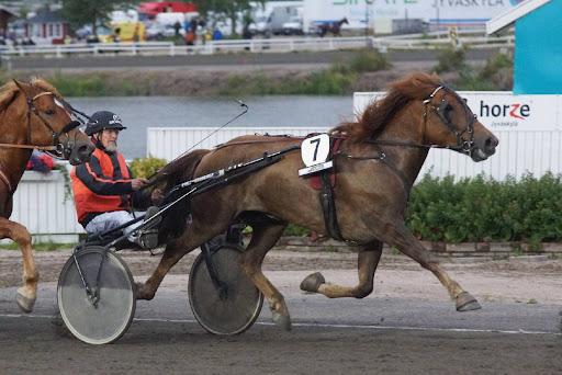 Juhani Heikkisen Virin Varpu on ainoa tamma finaalissa. Voittaja palkitaan 45 000 euron ykköspalkinnolla. Kuva: Merja Ahola-Turpeinen