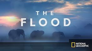 The Flood thumbnail