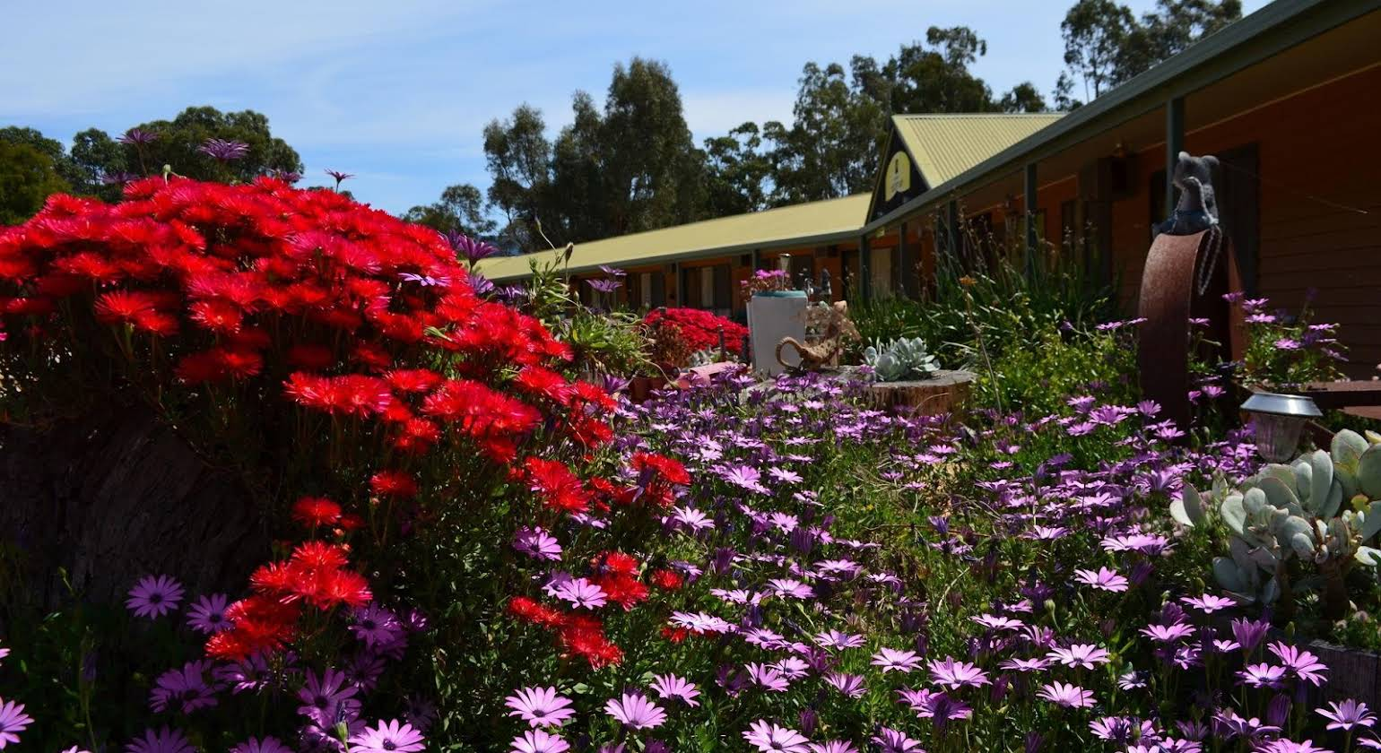 Mountain View Motor Inn & Holiday Lodges