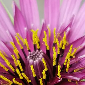 My Flower Art.  Photo by Janet Young Abeyta~ by Janet Young- Abeyta - Abstract Macro (  )