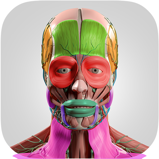 Baixar Cartões Flash Anatomia para Android