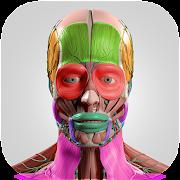 App Anatomy Cards Anatomicus APK for Windows Phone