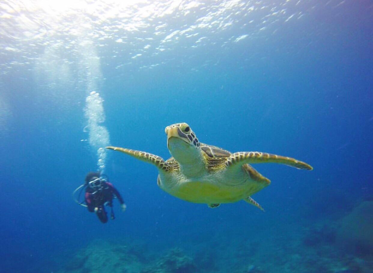 綠島潛水看海龜