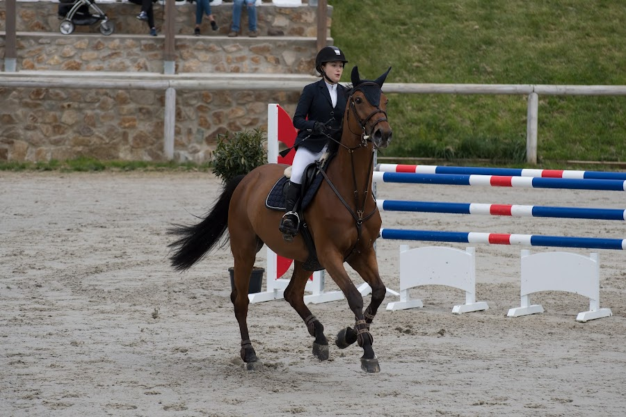 Horse by Zaharescu Dragos - Sports & Fitness Other Sports ( horse )