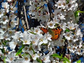 Photo: motylek wśród kwiatów