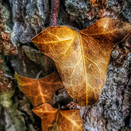 Devil is in the detail  by Andreja Svenšek - Nature Up Close Leaves & Grasses ( gold, tree trunk, leaves, nature, up close, tree, detail,  )