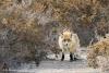 Off-the-Beaten Path Uzbekistan: A 3-Day Aral Sea Tour // Fox