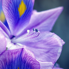 Bloe Lily by Agoes Antara - Nature Up Close Flowers - 2011-2013