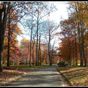 Autumn street by Patti Westberry - City,  Street & Park  Street Scenes ( streets,  )