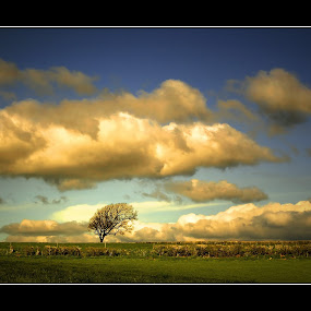 Any Way The Wind Blows by Nigel Finn - Landscapes Prairies, Meadows & Fields ( solitary, clouds, swept, wind, tree, horizon, blown, landscape, alone )