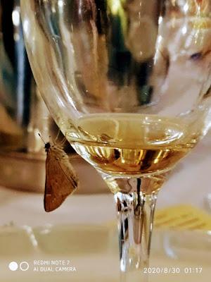 farfalla sul bicchiere di mariella_aliotta