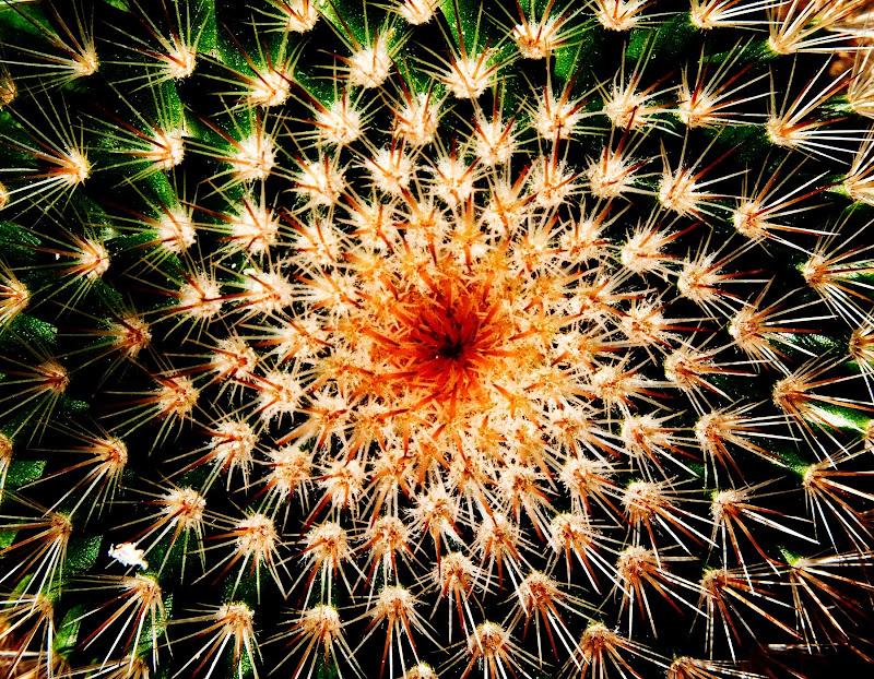 simmetrie circolari di Fiorenza Aldo Photo