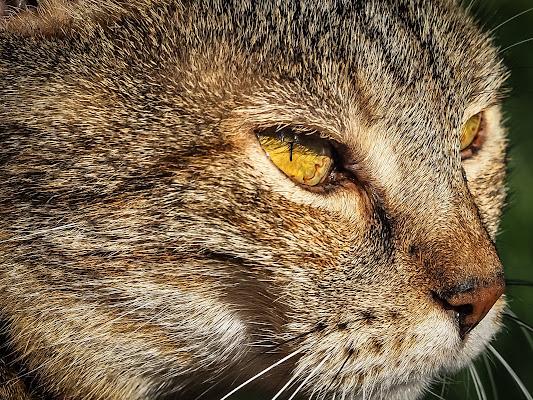 Profilo di gatto di VIC61