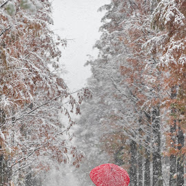 snowing with red umbrella by Charles Saswinanto - Landscapes Travel ( red, white, umbrella, snow, winter, snowing,  )