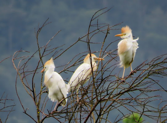 Uccelli di Giorgio Lucca