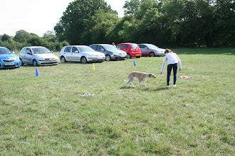 Photo: DogBasics Fun Day 2013 - Lily and Henry Whippet in the Contact Slalom