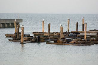 Photo: Sea lions