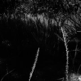 Black-white Day by Ronald McCafferty - Black & White Landscapes (  )
