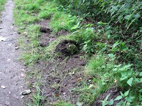 Photo: Spuren der Wildschweine