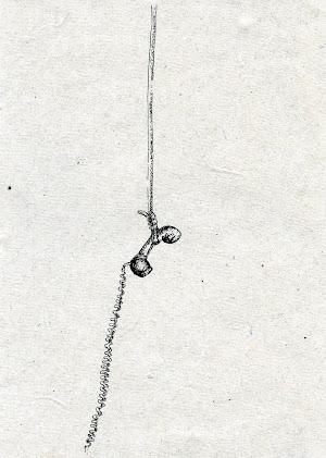 nour-awada-parabole-3