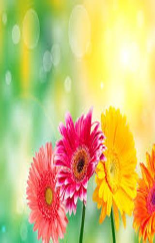 Flower Scratch Card for Kids