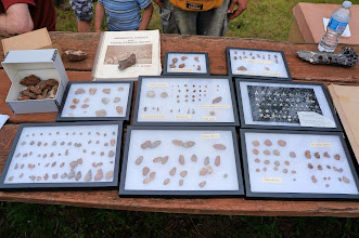Photo: A collection of the fossils found at Hill Annex Mine.