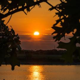 Sunrise Thru The Tree by Kathy Suttles - Landscapes Sunsets & Sunrises (  )