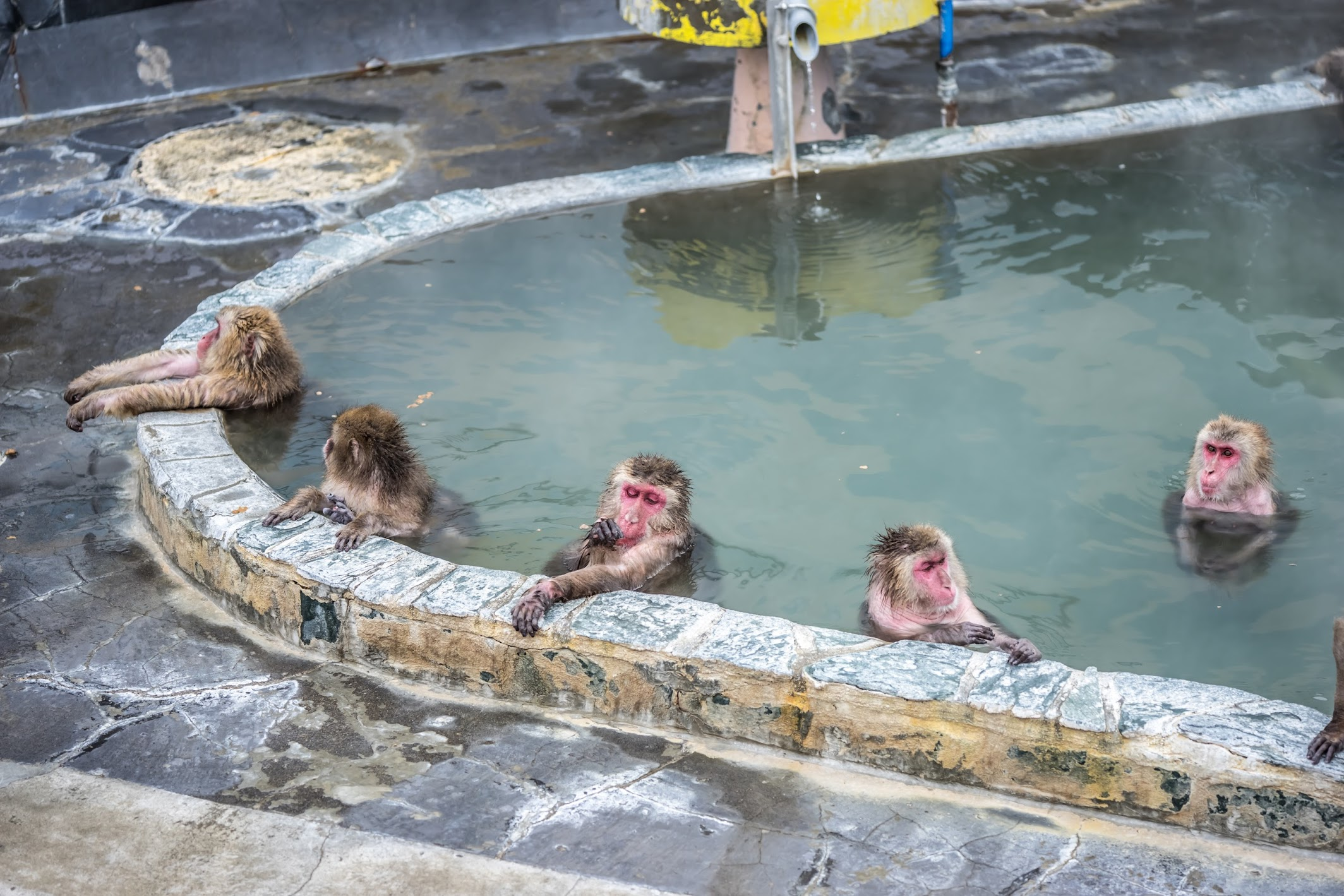 Hakodate Tropical Botanical Garden monkeys hot spring4