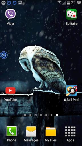 Owl The Snow Live Wallpaper