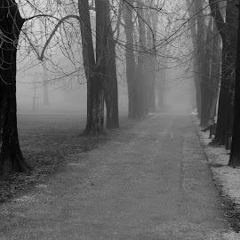 by Dušan Gajšek - Black & White Landscapes ( za fotoklub, klub, fotoklub, park )