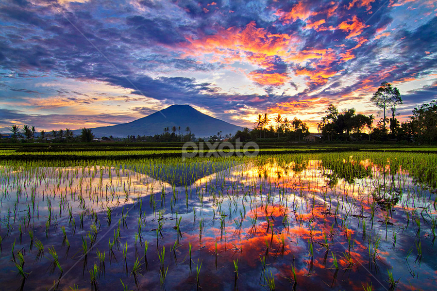 Mirror of Nature by Silverado Yoenoes - Landscapes Prairies, Meadows & Fields ( canon, rice_field, mountain, blue_hour, paddy, valley, dempu, field, twillight, south_sumatera, tree, dempo, sumatra, sunset, golden_hour, mount_dempo, pagaralam, cloud, sunrise, tokina )